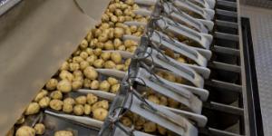 aardappel sorteermachine