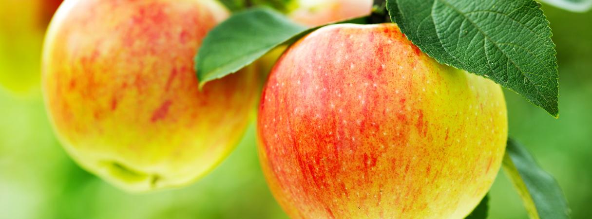 Appels groeien aan bomen