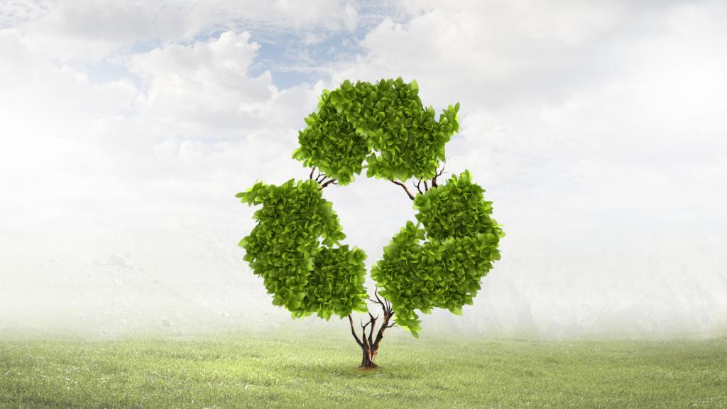 Duurzame boom