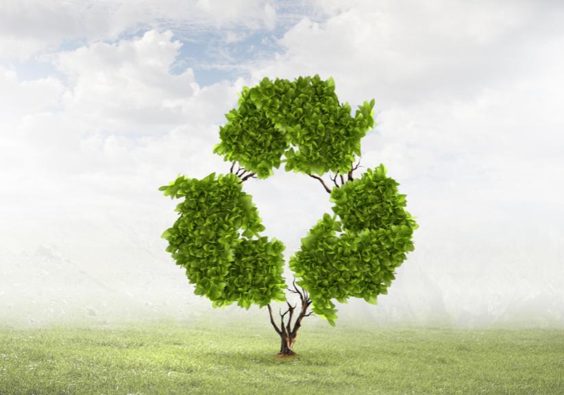 Whitepaper-papier---duurzaam-boom